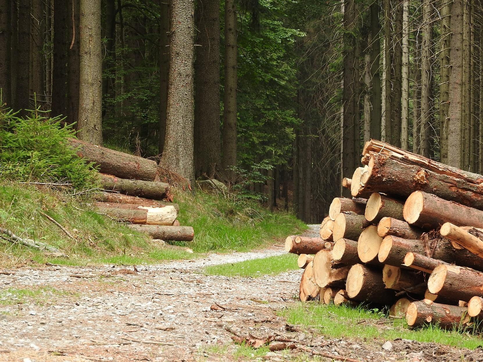 lesní stroje-large