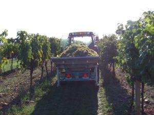 Vyvážecí vana na hrozny Agrofer SRL