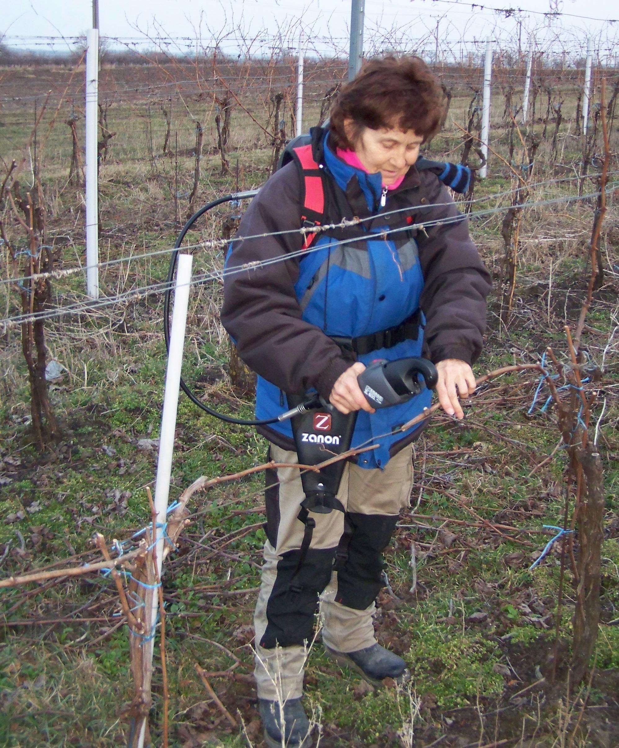 Vyvazovač letorostů Zanon vinohrad