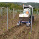 Výživa a hnojení vinice