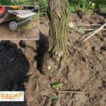 Orizzonti Multy 2 Speed green
